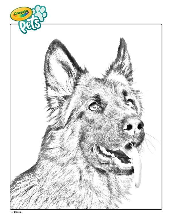 German Shepherd Pet Dog Coloring Page | crayola.com