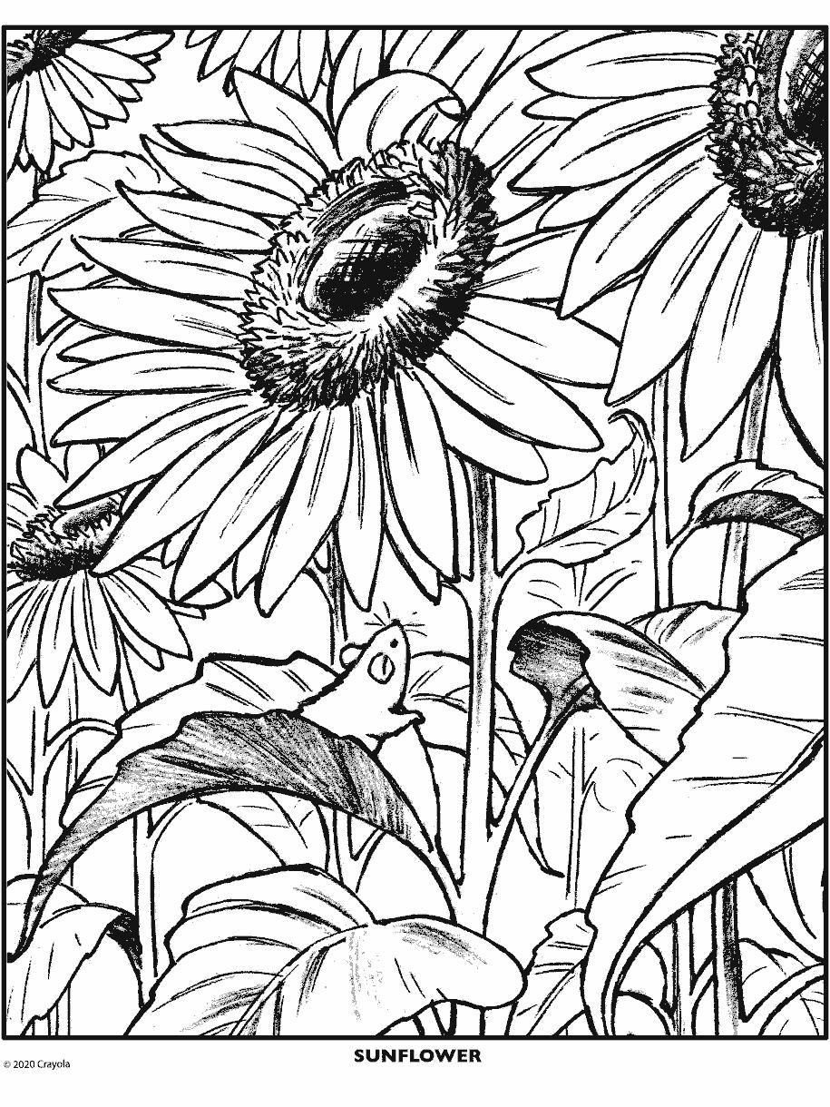 - Sunflower Crayola.com