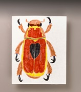 Intriguing Insects lesson plan