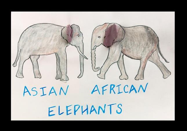 Elephant Ears African Or Asian Crayola Com