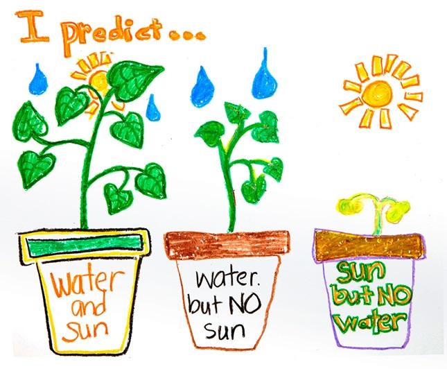 predictions about plants. Black Bedroom Furniture Sets. Home Design Ideas